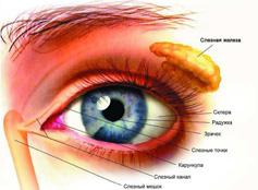 слизистая оболочка глаза