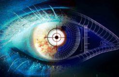 Функции палочек и колбочек в сетчатке глаза