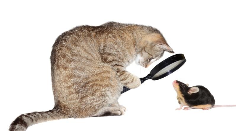 кошка разглядывает мышку под лупой