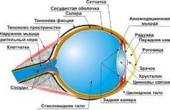Строение стекловидного тела глаза и лечение кровоизлияния в нем